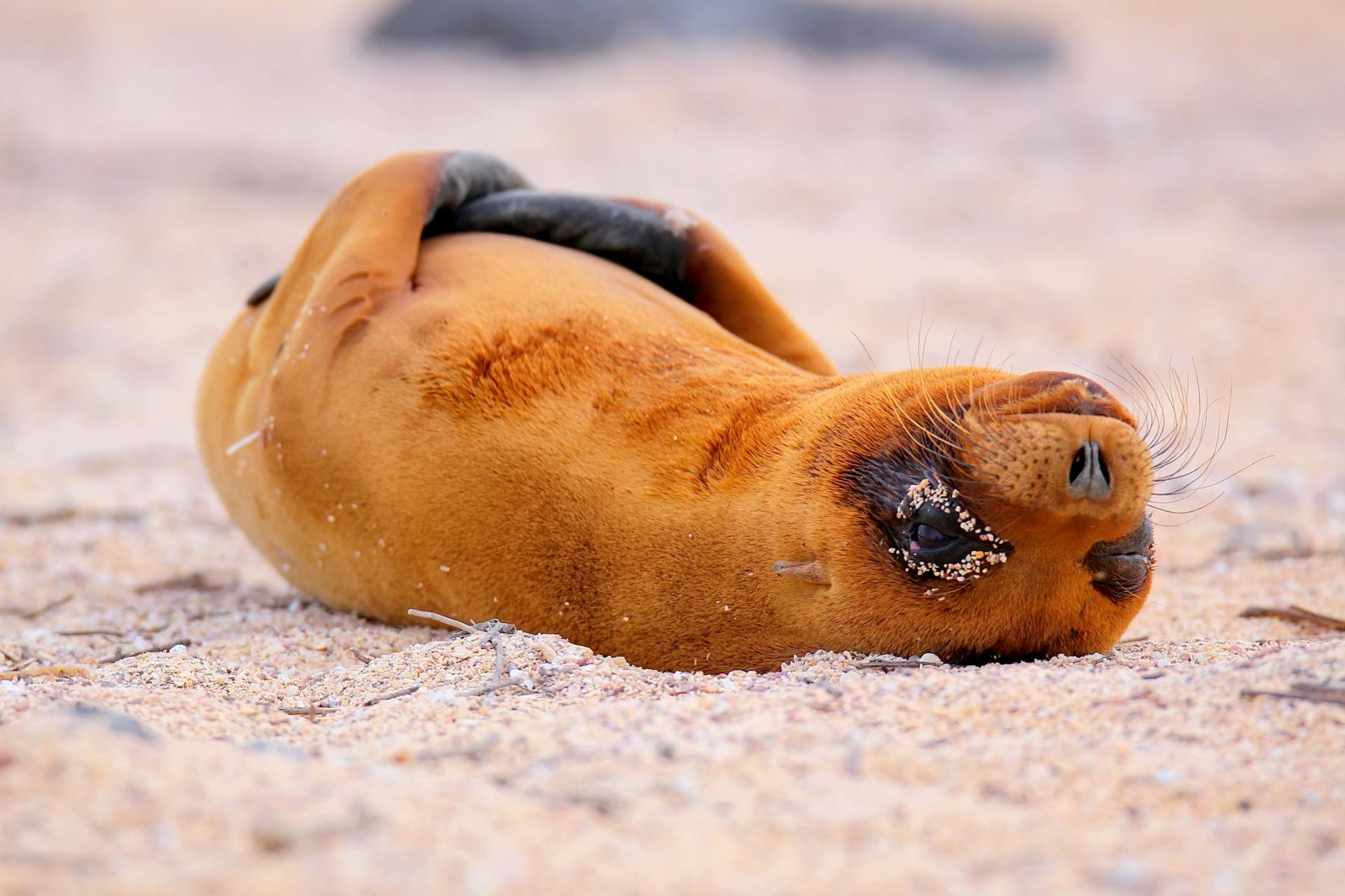 Het Andere Galapagos