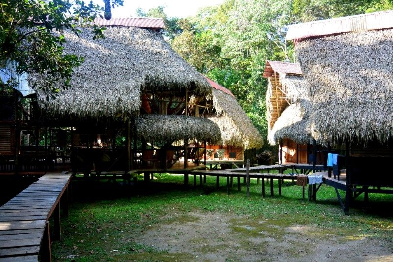 amazone jungle ecuador lodge natuur